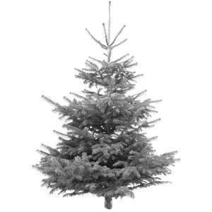 Weihnachtsbaume ǀ Toom Baumarkt