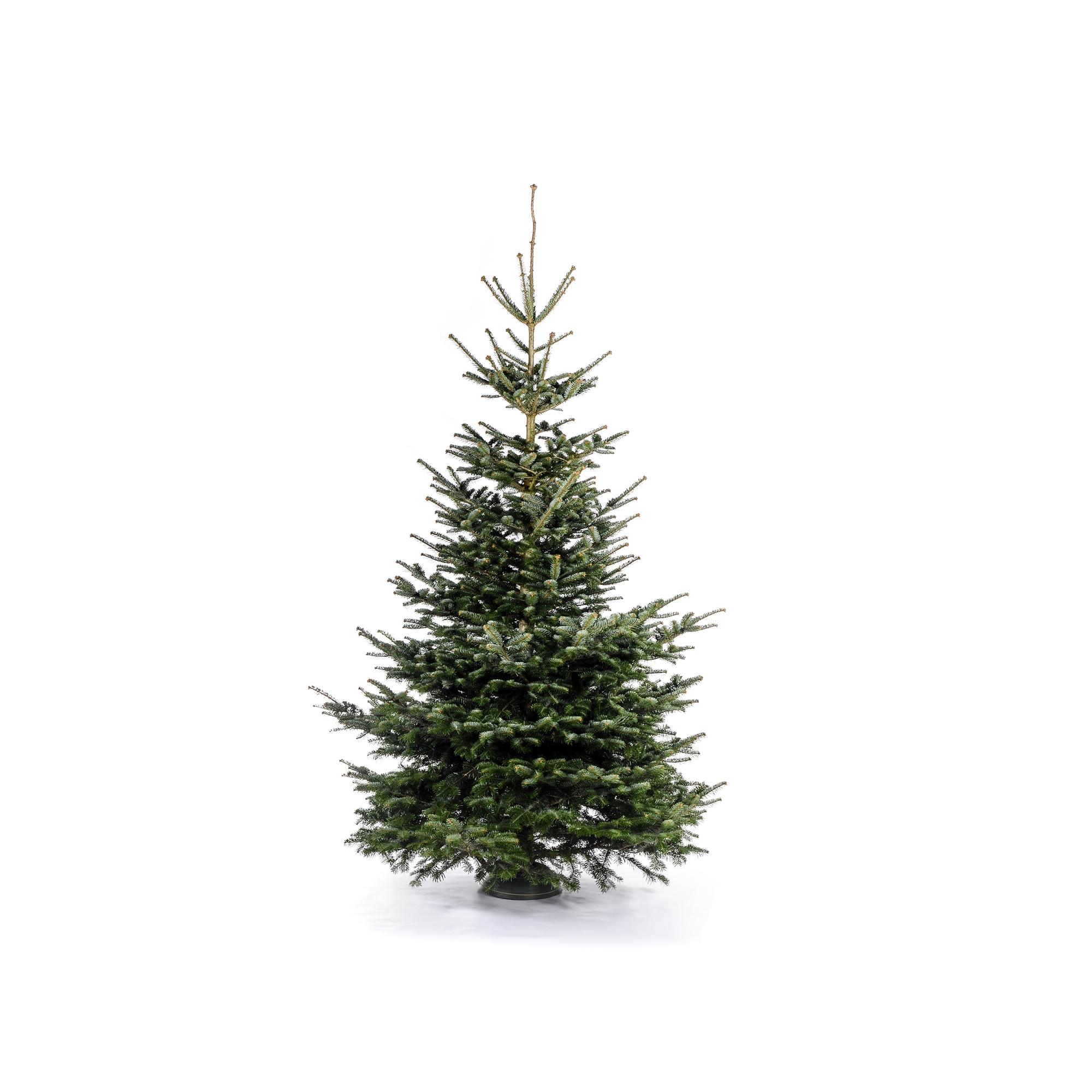hagebaumarkt munchen weihnachtsbaum neujahrsblog 2020. Black Bedroom Furniture Sets. Home Design Ideas