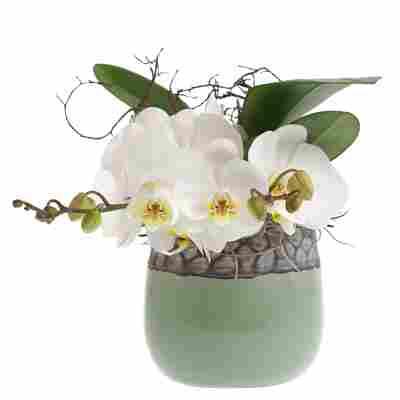Orchideen-Arrangement 1 weiße Orchidee im grau-grünen Topf