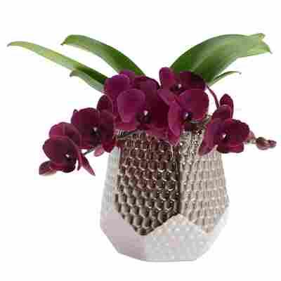 Orchideen-Arrangement 1 violette Orchidee im silberfarbenen Grafik-Übertopf