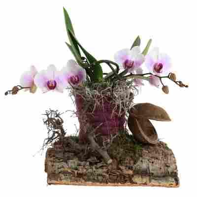 Orchideen-Arrangement 1 weiß-violette Orchidee auf Holz