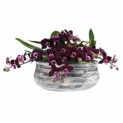 Orchideen-Arrangement 3 violette Orchideen in schwarz-weiß gestreifter Schale