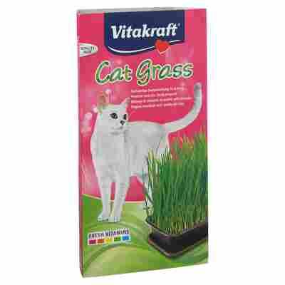 Katzengras Saat 120 g