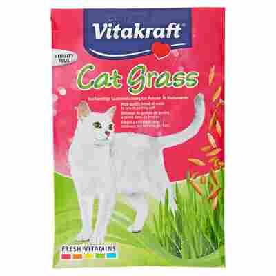 Katzengras-Saatenbeutel 50 g