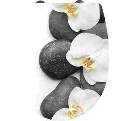 Thermoplast WC Sitz 'Orchidee' mit Absenkauomatik