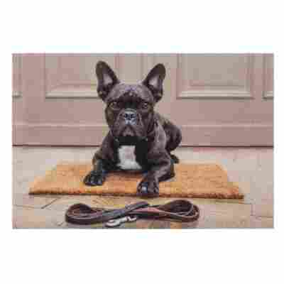 Sauberlaufmatte 'Deco Print' 40 x 60 cm Bulldogge braun