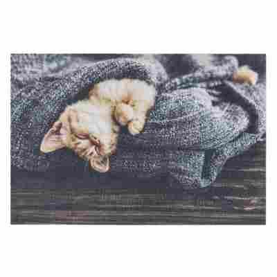 Sauberlaufmatte 'Deco Print' 40 x 60 cm Katze grau