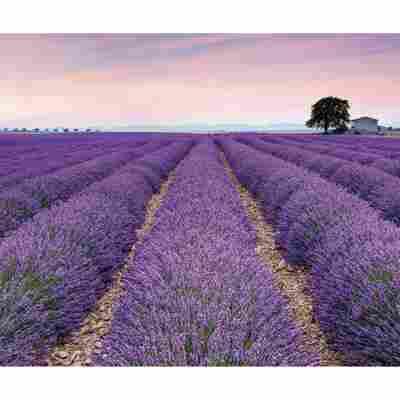 Vlies-Panel 'Provence'