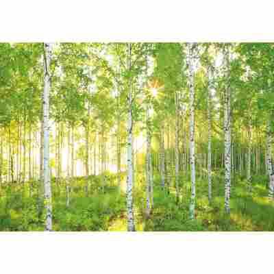 Vliesfototapete 'Sunday' 368 x 248 cm