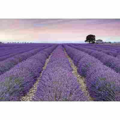 Vliesfototapete 'Provence' 368 x 248 cm