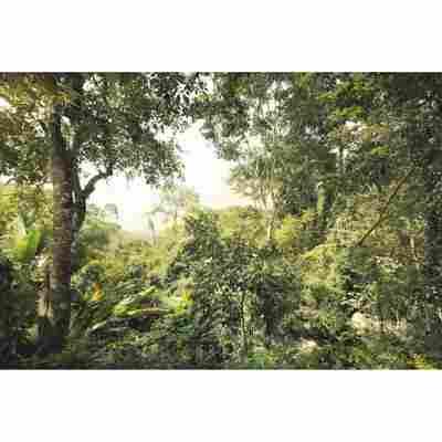 Vliesfototapete 'Dschungel' 368 x 248 cm