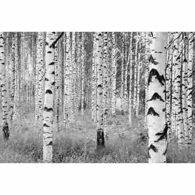 Vliesfototapete 'Woods' 368 x 248 cm