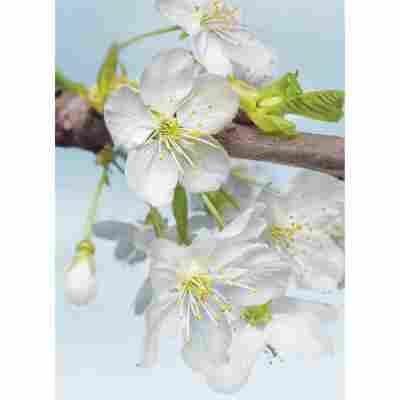 Vliesfototapete 'Blossom' 184 x 248 cm