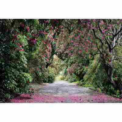 Komar Fototapete 'Wicklow Park' 368 x 254 cm