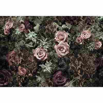 Komar Fototapete 'Velvet' 368 x 254 cm