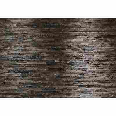 Fototapete 'Birkenrinde' 368 x 254 cm
