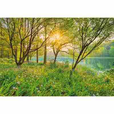 Fototapete 'Spring Lake' 368 x 254 cm