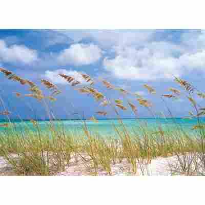 Komar Fototapete 'Ocean Breeze' 368 x 254 cm