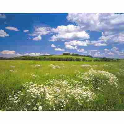 Komar Fototapete 'Meadow' 368 x 254 cm