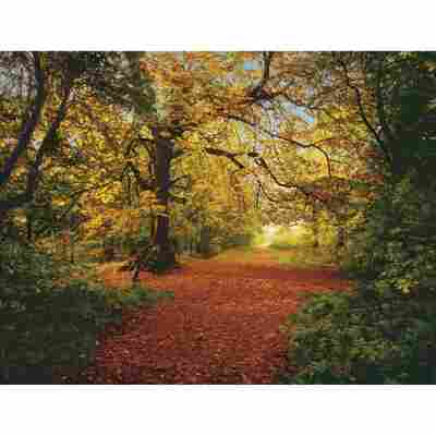 Komar Fototapete 'Autumn Forest' 388 x 270 cm