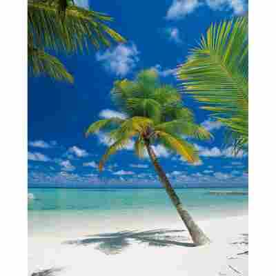 Komar Fototapete 'Ari Atoll' 184 x 254 cm