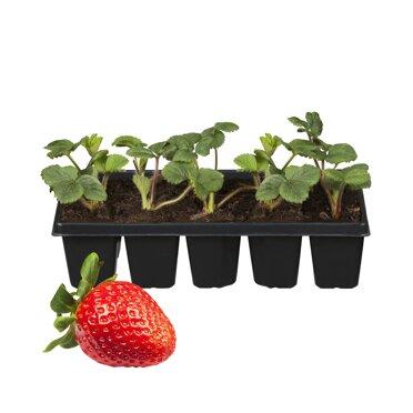 Berühmt Erdbeeren ǀ toom Baumarkt @CL_07
