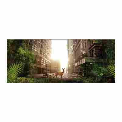 Glasbild 30 x 80 Relax III