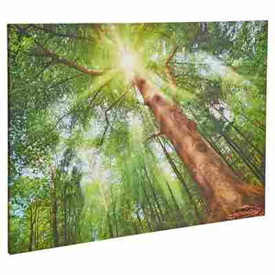 "Leinwandbild Canvas ""Sonne"" 77 x 57 cm"