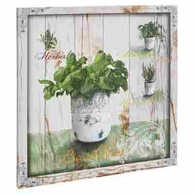 """Leinwandbild Canvas """"Hierbas I"""" 40 x 40 cm"""