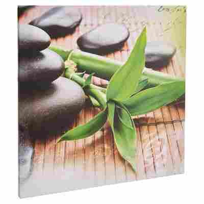 """Leinwandbild Canvas """"Bambus"""" 50 x 50 cm"""