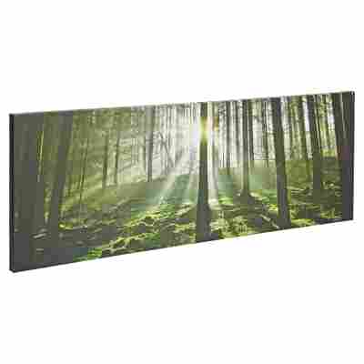 "Leinwandbild Canvas ""Wald"" 77 x 27 cm"