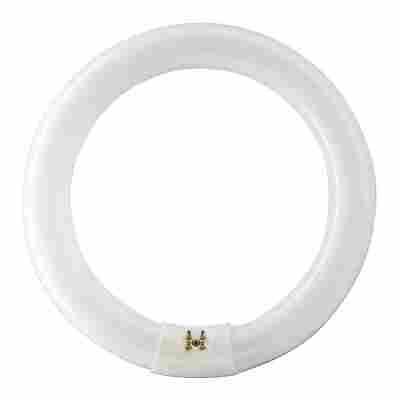 Philips Ringlampe TL-E 'Circular Super 80' kaltweiß