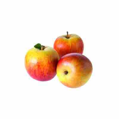 Naturtalent by toom® Bio Apfel 'Holsteiner Cox', Busch®