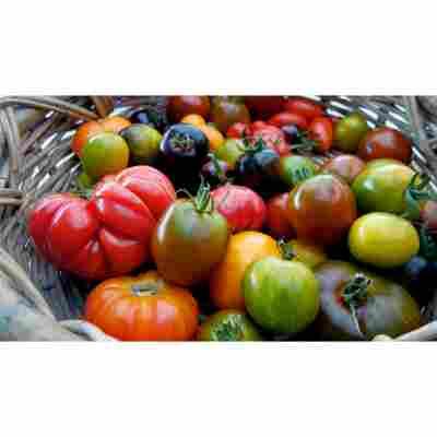 Naturtalent by toom® Historische Bio-Tomaten, 2er-Set