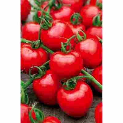 Tomate 'Rotkäppchen' Datschenstolz, 2er-Set
