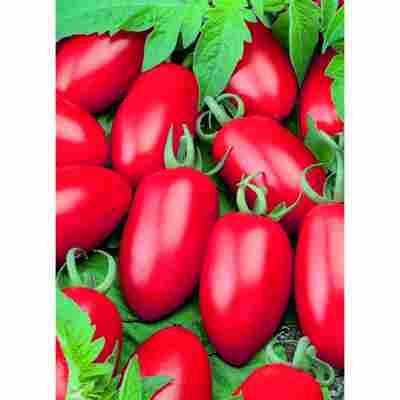 "veredelte Mini-Tomate ""Caprese"""
