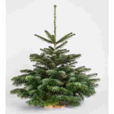 Weihnachtsbaum Künstlich Nordmanntanne.Nordmanntanne Mit Holz Ständer