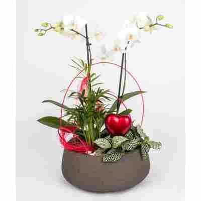 Muttertagschale Phalaenopsis