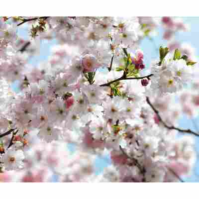 "Fotopanel Vlies ""Spring"" 3 Bahnen"