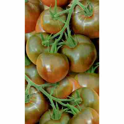 Naturtalent by toom® Historische Bio-Tomate 'Schwarze Krim', 11 cm Topf, 2er-Set