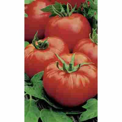 Naturtalent by toom® Historische Bio-Tomate 'Rote Russische', 11 cm Topf, 2er-Set