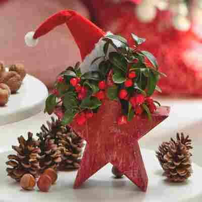 Adventsstern mit Scheinbeere rot 18 x 30 cm